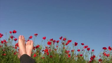 Carefree man on poppy field — Stock Video