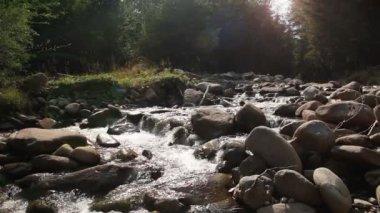 Górski las rzeka — Wideo stockowe
