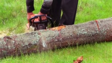 Cut Chainsaw — Stock Video