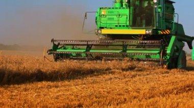 В жаркий день для сбора урожая — Стоковое видео