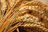 A sheaf of grain — Stock Photo