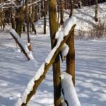 Deutsche Winterlandschaft — Stock Photo #23346088
