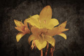 Yellow Asiatic lily on old grunged canvas background — Stock Photo