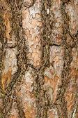 La corteza de los árboles de pino, iluminada por el sol. fondo natural vertical — Foto de Stock