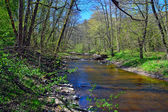 Spring on the little forest river — Stock Photo