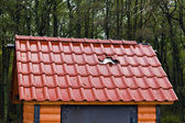 Barbarism: a hole in a new roof — Stock Photo
