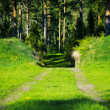 Pathway to forest — Stock Photo