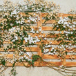 Stock Photo: Vines on trellis