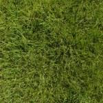 Lawn — Stock Photo #23383686