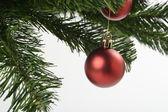 Red decorative ball on Christmas tree — 图库照片
