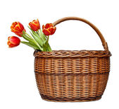 Red tulips in wicker basket — Stock Photo