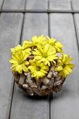 Floral spring composition — Stockfoto