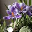 Crocuses — Stock Photo