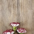 Fresh carnation flowers on wooden background - 