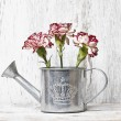 Постер, плакат: Pink carnation flowers in silver watering can