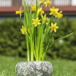 Yellow daffodils in grey stone pot on fresh green grass in the g — Stock Photo