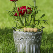 Persian buttercup flowers (ranunculus) in grey pot on fresh gree - Stock Photo