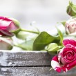 Romantic pink roses on grey wooden tray — Stock Photo