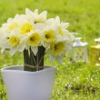 Bouquet of daffodils on fresh green grass. Symbol of spring and — Stock Photo