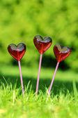 Red lollipops in heart shape, on fresh green grass, in the garde — Stock Photo