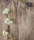 Apple blossom on wooden background. Copy space. — Stock Photo