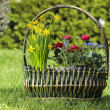 Huge basket full of colorful flowers in the garden — Stock Photo