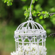 Birdcage with flowers inside, hanging on a branch — Zdjęcie stockowe