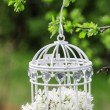 Birdcage with flowers inside, hanging on a branch — Stok fotoğraf
