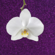 White orchid on purple glitter background, copy space. — Stock fotografie