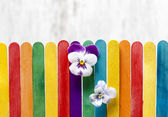 The pansy flowers on colorful wooden fence. Copy space. — Stock Photo