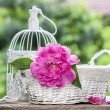 Single pink peony flower in white wicker basket — Stock Photo