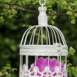Birdcage with pink flowers inside, hanging on a branch in green, — Stock Photo