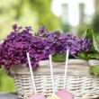 Pastel colors cake pops on wooden table. Fresh lilac flowers in — Stock Photo