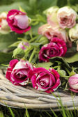 Garden party decor. Bouquet of pink roses on wicker tray, on fre — Stock Photo