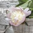 Pink peony in wicker basket on rustic wooden table. — Foto Stock