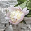 Pink peony in wicker basket on rustic wooden table. — Foto de Stock