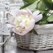 Pink peony in wicker basket on rustic wooden table. — Stock Photo #26544599