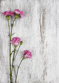 Pink carnation isolated on wooden background — Stock Photo