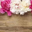 Stunning peonies on wooden background — Stock Photo