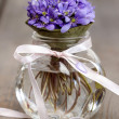 Hepatica flowers, pretty small bouquet in a vase. — Stock Photo