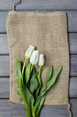 Fresh white tulips on hessian canvas. — Stock Photo