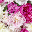 Peony pattern — Stock Photo #26796567