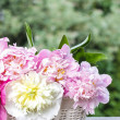 Stunning peonies in white wicker basket - Stockfoto