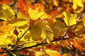 Yellow autumn leaves on branch — Stock Photo