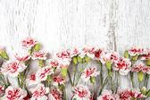 Oeillets roses isolés sur fond en bois — Photo