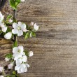 Apple blossom on wooden background. Copy space. — Stock Photo #27138619