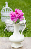 Single pink peony flower in white ceramic vase on fresh green — Стоковое фото