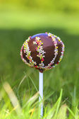 Chocolate cake pops lavishly decorated with colorful sprinkles — Stock Photo