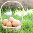 Basket of eggs on grass. Easter symbol. — Stock Photo