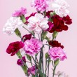 Bouquet of pink carnation flowers on pink background. Copy space — Stock Photo